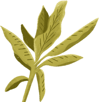 detail-plant-links2.png