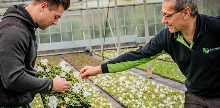 2020121634_-_kwekerij_maarten_bloemen.jpg