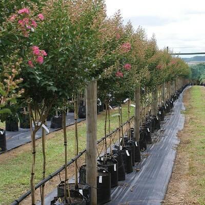 plants.jpg.400x400_q9...